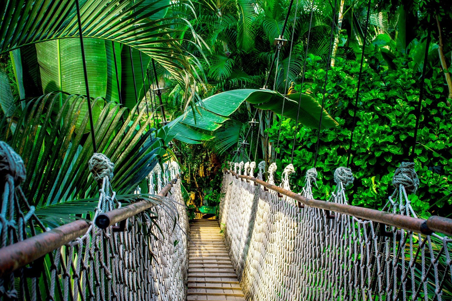 Como viajar para o Brasil e experimentar a floresta tropical e a Amazônia